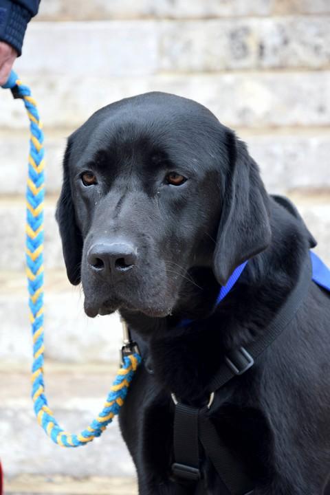 Lol, premier chien d'assistance psychologique aux victimes d'infractions pénales