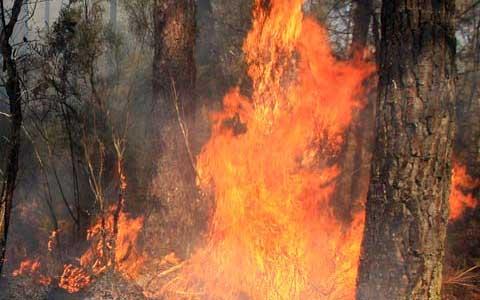 Feux de Forêts - Pompiers