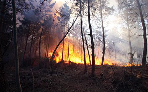 Prévention des riques - Feux de forêts