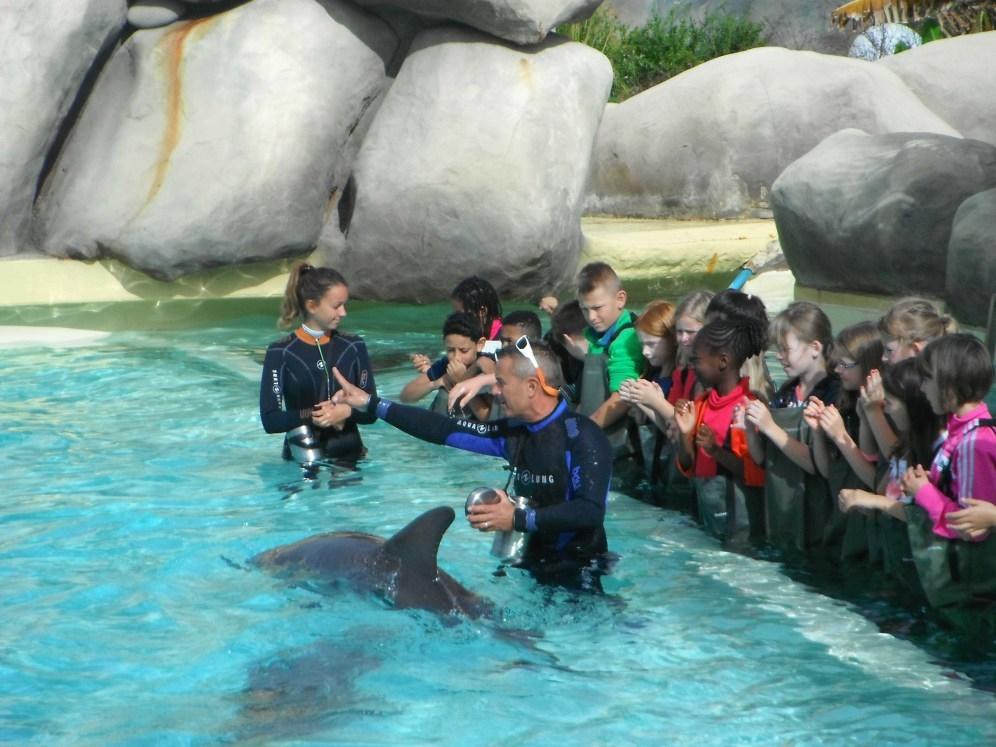 Les dauphins du Grand Bleu